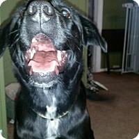 Adopt A Pet :: Sugar - Carteret/Eatontown, NJ