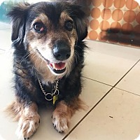 Adopt A Pet :: DASHIEL - Beverly Hills, CA