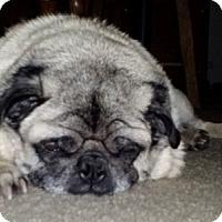 Adopt A Pet :: Hooty - Farmington, MI