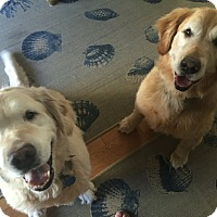 Adopt A Pet :: Bragi and Jaeger - New Canaan, CT