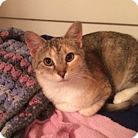 Adopt A Pet :: Maggie Moo - West Des Moines, IA