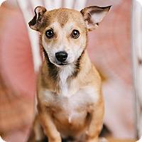 Adopt A Pet :: Skeeter - Portland, OR