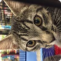 Adopt A Pet :: Destiny - Chattanooga, TN