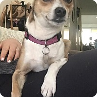 Adopt A Pet :: Trixie - San Diego, CA