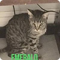 Adopt A Pet :: Emerald - Glendale, AZ