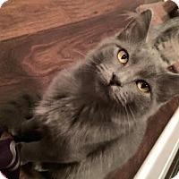 Adopt A Pet :: Polliwog - West Des Moines, IA
