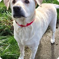 Adopt A Pet :: PICKLES - Newport, OR