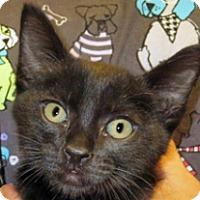 Adopt A Pet :: Tommy - Wildomar, CA