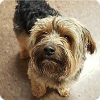 Adopt A Pet :: Jax - Albion, NY