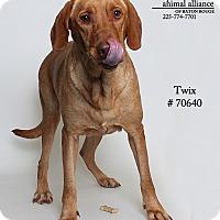 Adopt A Pet :: Twix - Baton Rouge, LA