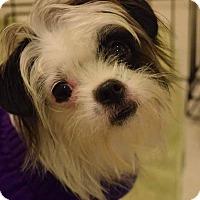 Adopt A Pet :: Marilyn - Hanover, PA