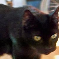 Adopt A Pet :: Sammy* - Trexlertown, PA