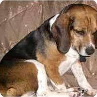 Adopt A Pet :: Trixie - Novi, MI