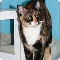 Adopt A Pet :: Ali - Marietta, GA