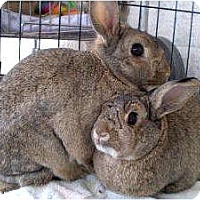Adopt A Pet :: Bonnie & Clyde - Williston, FL