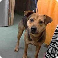 Adopt A Pet :: Sage URGENT - San Diego, CA