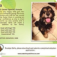 Adopt A Pet :: Bella - Ottawa, ON