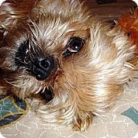 Adopt A Pet :: LOVER BOY - ADOPTION PENDING - Seymour, MO