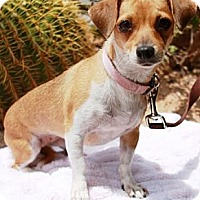 Adopt A Pet :: Hatcher - Gilbert, AZ