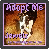 Adopt A Pet :: Jewelz - Cheney, KS