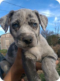 Rescue Dogs Davenport Iowa