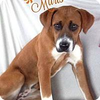 Adopt A Pet :: Maris - Albemarle, NC