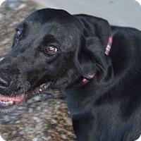 Adopt A Pet :: Kendra - Prole, IA