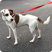 Adopt A Pet :: Wishbone - Jupiter, FL