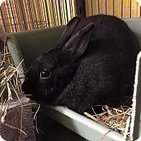 Adopt A Pet :: Frida - Woburn, MA