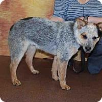 Adopt A Pet :: A582057 - Louisville, KY