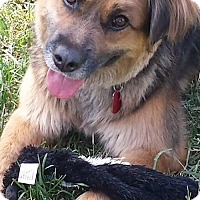 Adopt A Pet :: Faithe - Westminster, MD