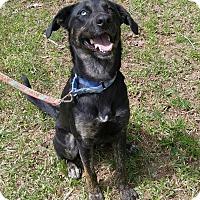 Adopt A Pet :: Stella - Chattanooga, TN