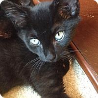 Adopt A Pet :: Revolution - North Highlands, CA