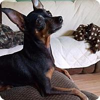 Adopt A Pet :: Zero - Grand Rapids, MI