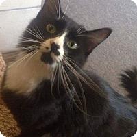 Adopt A Pet :: Magz - Buhl, ID