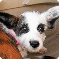 Adopt A Pet :: Jane - Chandler, AZ