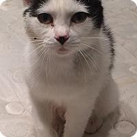 Adopt A Pet :: lyla - Muskegon, MI