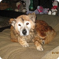 Adopt A Pet :: Sven - Glendale, AZ