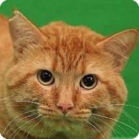 Adopt A Pet :: Q-Bert    URGENT - St. Charles, MO