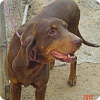 Adopt A Pet :: Bessie - Capon Bridge, WV