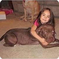 Adopt A Pet :: Maggie - Seattle, WA