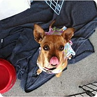 Adopt A Pet :: Chelsea - North Hollywood, CA