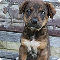 Adopt A Pet :: Mia - Stilwell, OK
