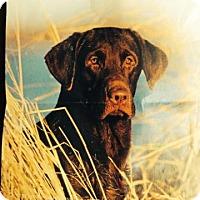 Adopt A Pet :: Coffey - Sherman, CT