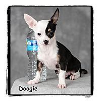 Adopt A Pet :: Doogie - Warren, PA