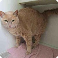 Adopt A Pet :: Tommi -may be adopted separate - Merrifield, VA