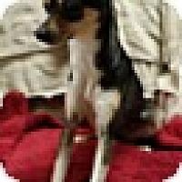 Adopt A Pet :: Lara (DC) - Hagerstown, MD