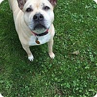 Adopt A Pet :: Sheila - Elderton, PA