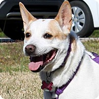 Australian Cattle Dog Mix Dog for adoption in McDonough, Georgia - Zoey
