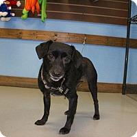 Adopt A Pet :: Elle - Austin, TX